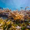 corales04